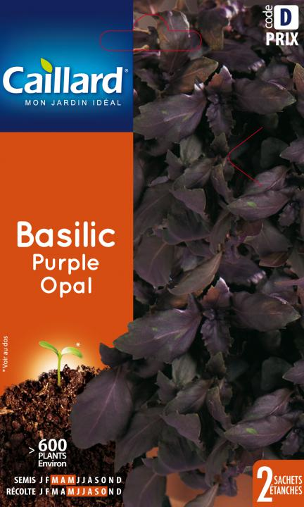 BASILIC PURPLE OPAL