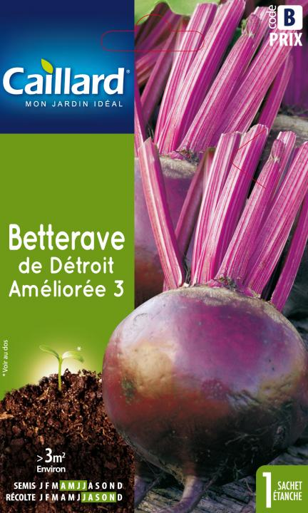 BETTERAVE DE DETROIT AMELIOREE 3