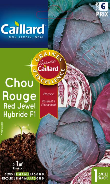 CHOU ROUGE RED JEWEL HYBRIDE F1