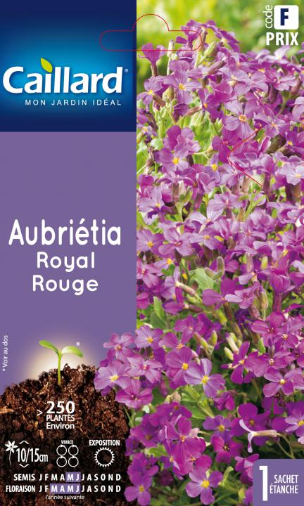 AUBRIETIA ROYAL ROUGE