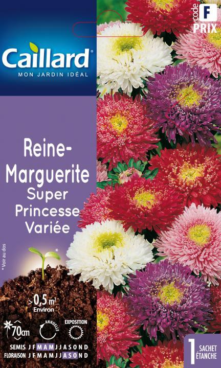 50 graines Super Princesse REINE MARGUERITE